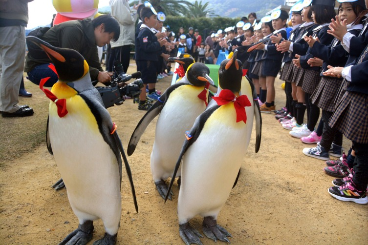 Penguin Parade Launching Ceremony In Nagasaki