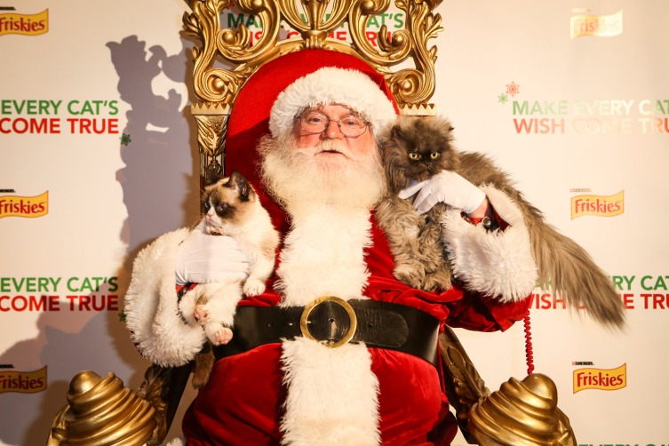 grumpy-cat-christmas-colonel-meow
