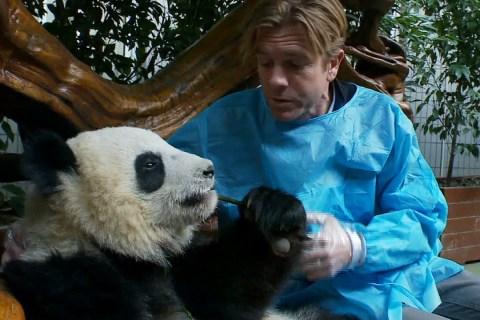 Panda park_1280