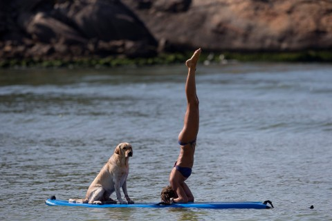 Cecilia Canetti practices yoga on a stand-up paddle board as her dog Polo accompanies her off Barra de Tijuca beach in Rio de Janeiro, Jan. 16, 2014.