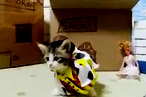 toy story kitten
