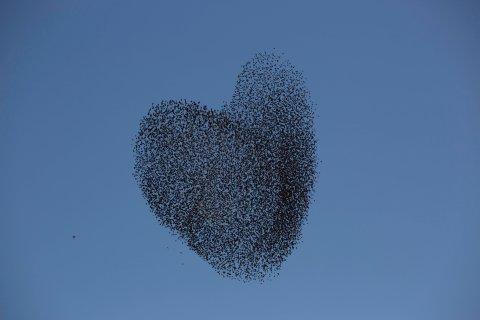 birds form a heart