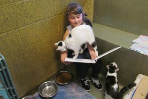 Cassandra-cats