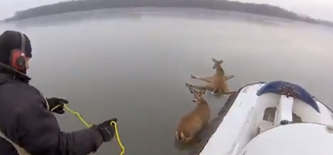 deer-hovercraft-rescue