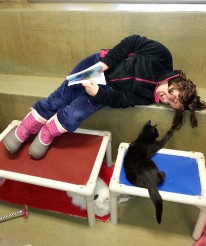 Isabel-Boyle-cats