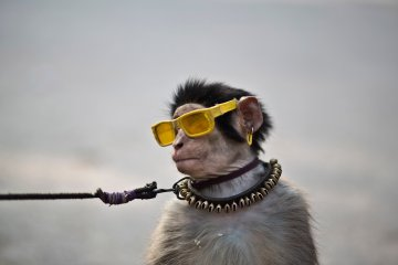 An eight-month-old trained monkey sits on a can next to his owner, holding the leash as they wait for customers to perform to in a park in Islamabad, Pakistan, Jan. 31, 2014.