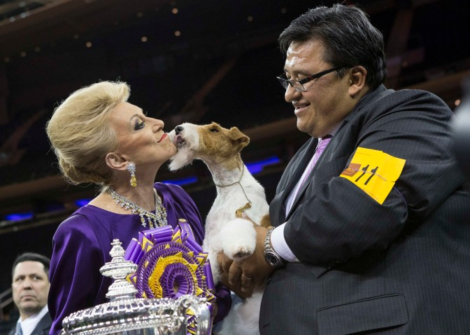 "Sky, a wire fox terrier, is held by her handler Gabriel Rangel (R) as she kisses judge Betty Regina Leininger (L) after winning ""best in show"" at the 2014 Westminster Kennel Club Dog Show in New York Feb. 11, 2014."