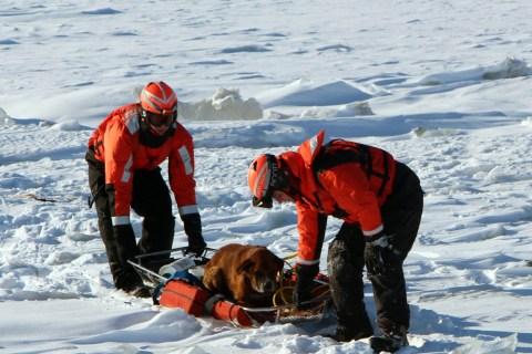 Coast-Guard-Dog-Rescu_2
